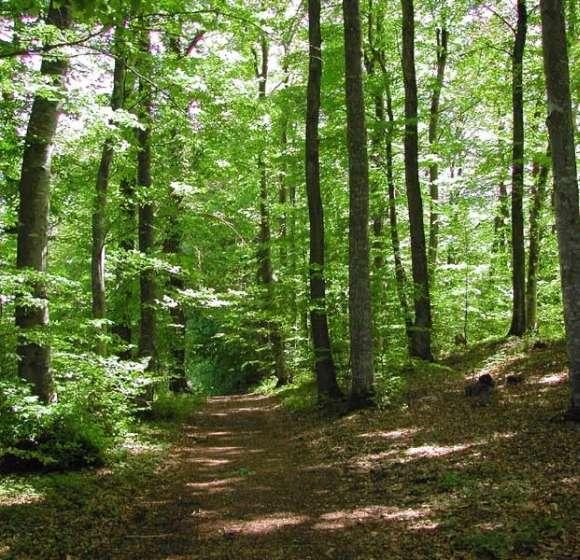 Charte forestière de la Vallée de la Bruche